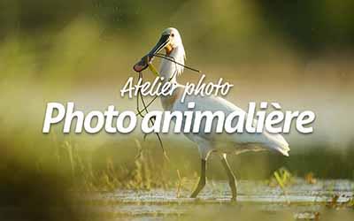 La photographie animalière |