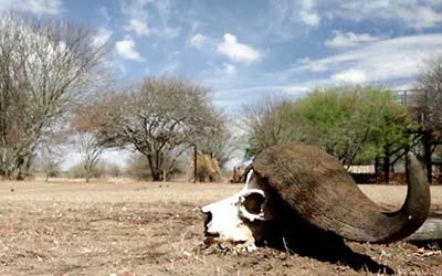 Kenya : la guerre du bétail |