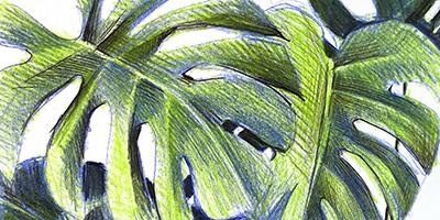 Les végétaux aux crayons de couleur |